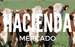Subió el precio del novillo en el Mercado de Hacienda de Liniers