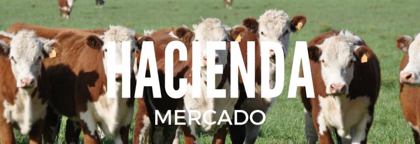 Ante una oferta abundante bajó el valor de la hacienda en el Mercado de Liniers
