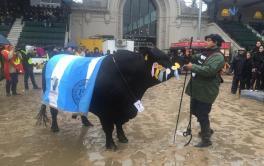 (Español) Rancho Grande y Pastoril Agropecuaria ganaron el Gran Campeón Macho Brangus de Palermo