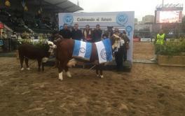 (Español) Los Orígenes, de Agrodec, se quedó con el Gran Campeón Hembra Braford