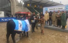 (Español) Brangus: dos cabañas de Córdoba se quedaron con el Gran Campeón Hembra y la Reservada