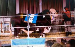 (Español) Pagaron $ 580.000 por el 50% de un toro Braford