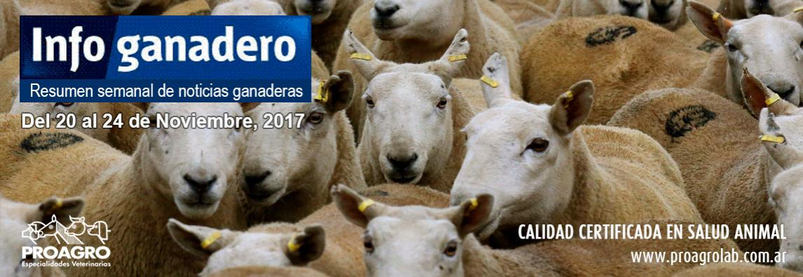 Según los productores feedloteros, cada año se suman 500 mil argentinos al consumo de carne vacuna