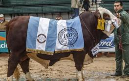 (Español) Por la mejora de la ganadería, prevén buenos precios en los remates de la Exposición Rural