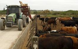 (Español) Analizan a fondo el impacto de la intensificación en la sanidad animal