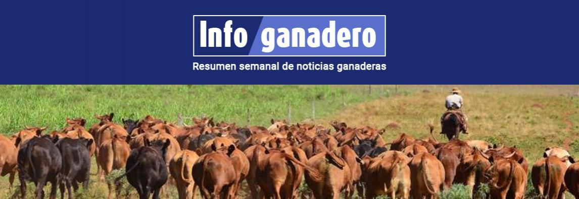 Cómo está Argentina en el ranking mundial de producción bovina