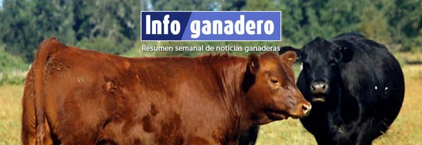 (Español) Los productores reponen hacienda para asegurar su capital
