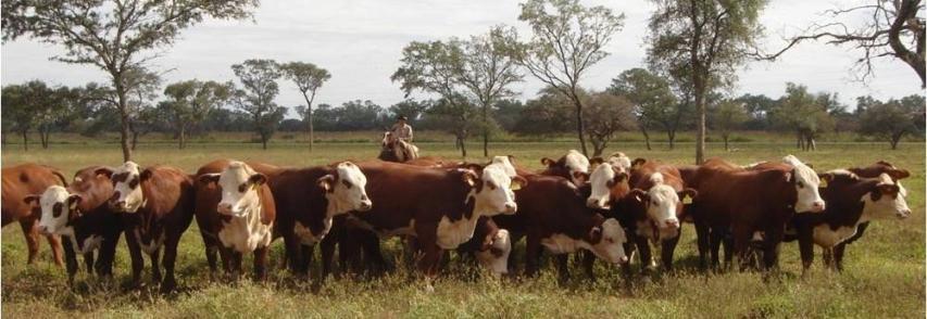 Garrapata común del bovino. Su incidencia en la producción