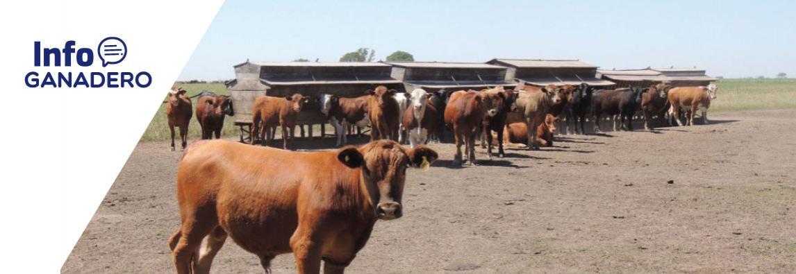 (Español) Más recría y mayor destete, tendencia de la nueva ganadería
