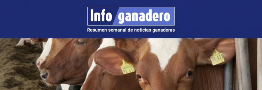 El negocio de la carne hoy: faena de hembras cerca de un récord, ventas externas imparables y consumo interno en caída libre