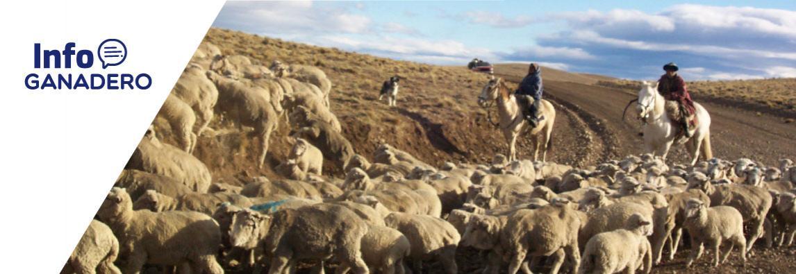 (Español) La carne ovina patagónica desembarca por primera vez en China