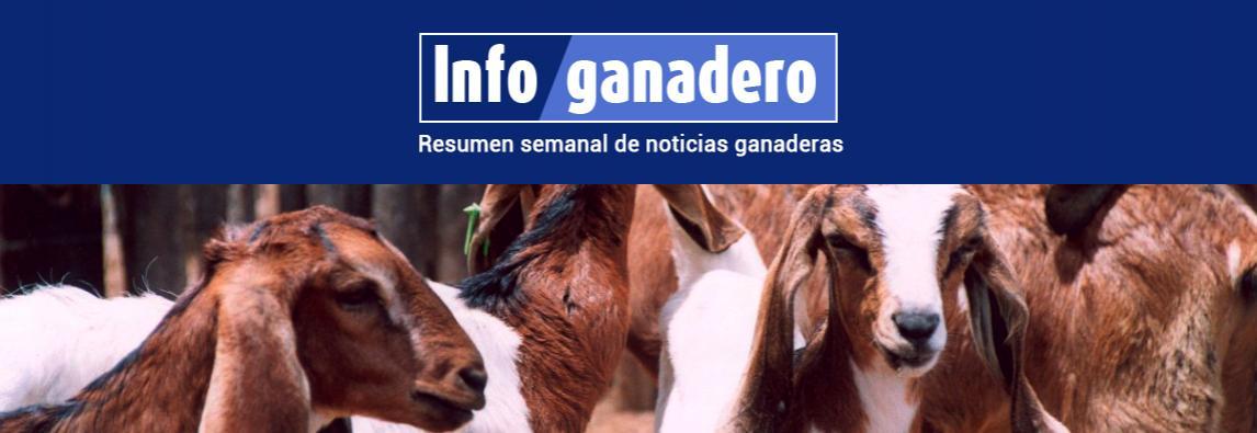 Misiones busca mejorar la genética de sus rodeos ovinos y caprinos