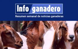 (Español) Misiones busca mejorar la genética de sus rodeos ovinos y caprinos