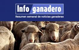 (Español) Cuáles son las principales razas y dónde se producen los ovinos en la Argentina