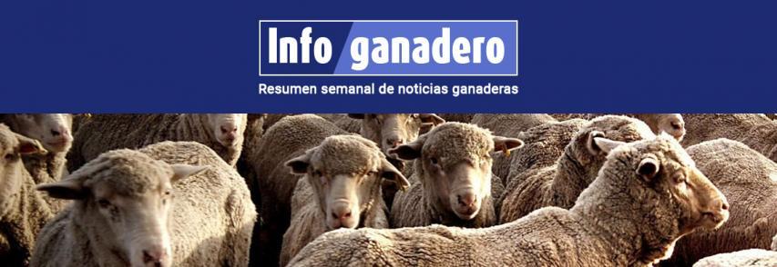 Cuáles son las principales razas y dónde se producen los ovinos en la Argentina