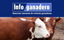 (Español) Ganadería: producción y consumo vs exportaciones y cómo encarar el futuro