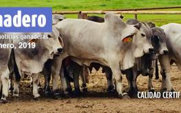 Rosgan lanzará una plataforma digital para negociación de ganado