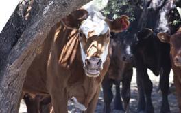 (Español) Los animales también pueden sufrir un golpe de calor: cómo cuidarlos
