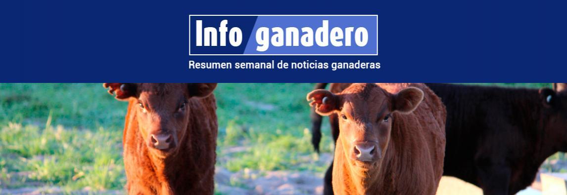 (Español) El ternero y la ternera no existen más, ahora son novillitos y vaquillonas livianas