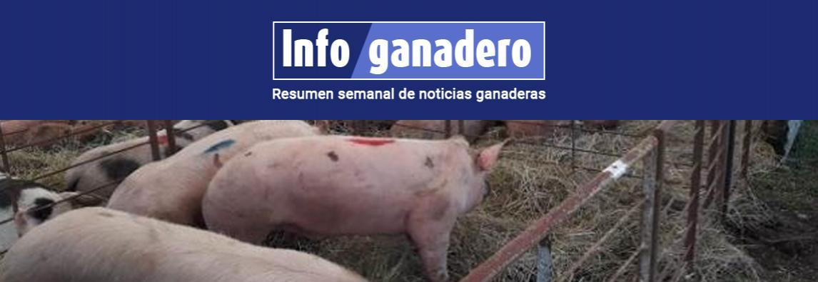 (Español) La Rural sin cerdos: prohíben la presencia de porcinos en exposiciones públicas