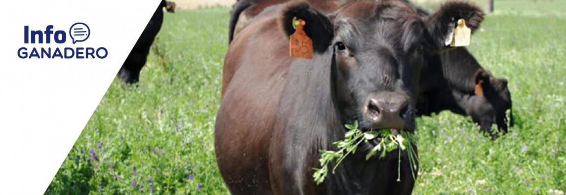 (Español) Enteque seco: cómo identificar intoxicación por duraznillo blanco en vacas de cría
