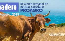 El impacto de la reducción de los reintegros a la exportación de carnes