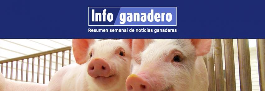 (Español) El sector porcino enfrenta desafíos y oportunidades