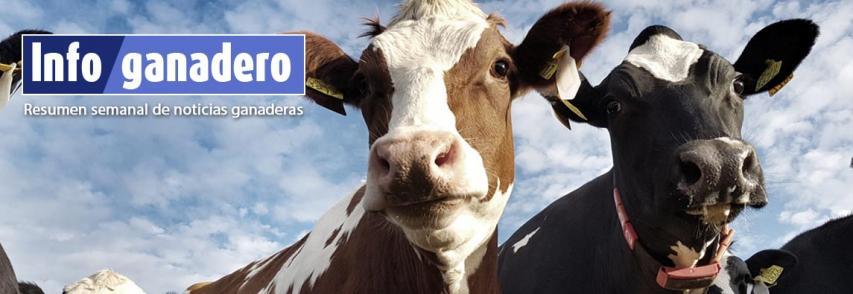 (Español) Claves para un cambio de paradigma en el bienestar animal
