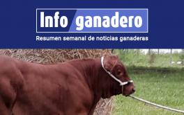 """(Español) Así es """"Gauchito"""", el primer ternero nacido de la transferencia de embriones de raza Brangus"""