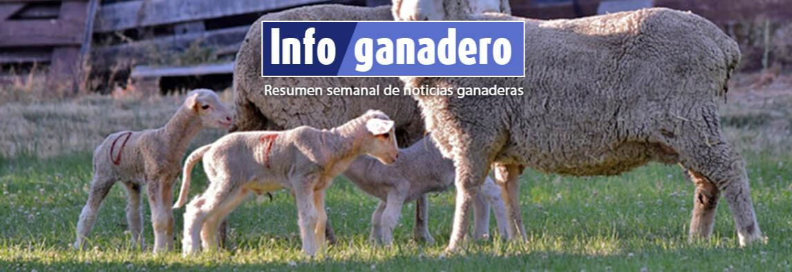 """Nacieron los primeros corderos """"de laboratorio"""" en la Patagonia"""