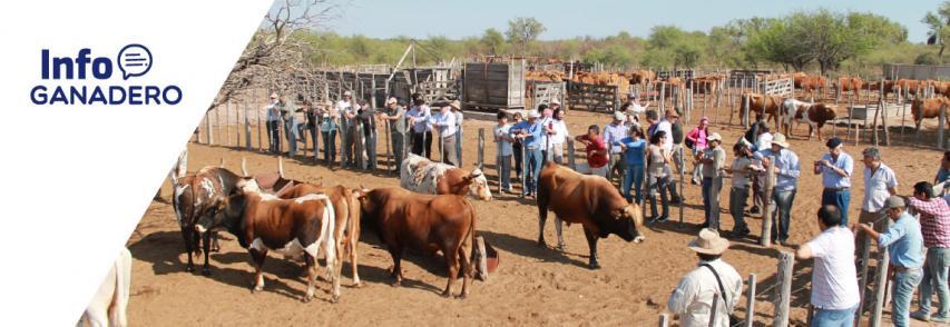 (Español) Las claves para lograr mejores terneros en campos áridos