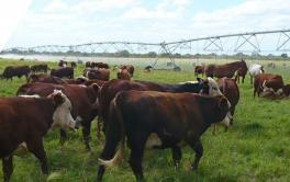 (Español) Senasa extendió el plazo de inscripción para exportar carne a la Unión Europea