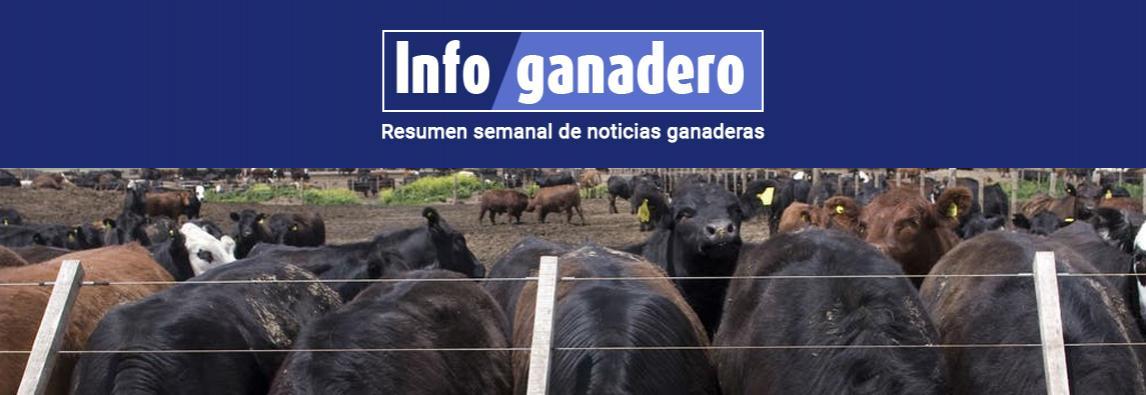 (Español) Mal de la vaca loca en Brasil: qué hace la Argentina para evitar una temible enfermedad