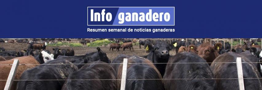 Mal de la vaca loca en Brasil: qué hace la Argentina para evitar una temible enfermedad