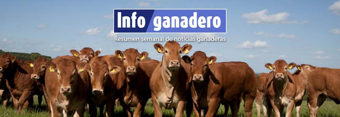 (Español) El cruzamiento, clave para producir más terneros por vaca y más carne por animal