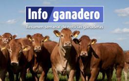 El cruzamiento, clave para producir más terneros por vaca y más carne por animal