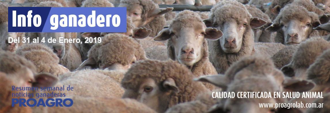 (Español) La carne de búfalos cordobeses llega a las góndolas locales y cruza la cordillera