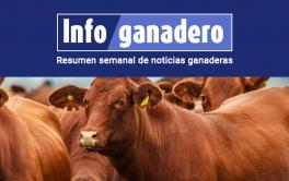 (Español) En ganadería, la estrategia para un crecimiento sostenido está en diversificar mercados