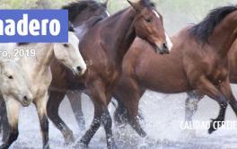 (Español) Informe de la Cámara de Industria y Comercio de Carnes y derivados