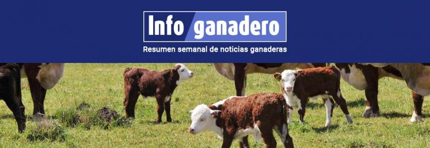 (Español) Aseguran que por retrasar la castración se pierden hasta 11 kilos por ternero