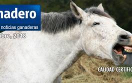 (Español) Tras casi una década, Argentina desbancó a Uruguay como segundo exportador regional de carne
