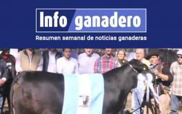 (Español) Brangus eligió a los grandes campeones de su exposición nacional