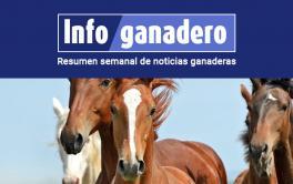 Alerta en el sector equino por una resolución del Mercosur sobre una enfermedad