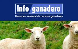 (Español) Ovinos: para 2030 buscarán aumentar 66% la producción de carne y 22% el stock