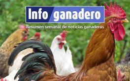 (Español) Huevos de gallinas libres de jaulas y pollos orgánicos: qué hay detrás de esta tendencia en el país
