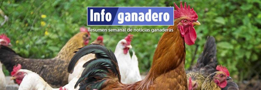 Huevos de gallinas libres de jaulas y pollos orgánicos: qué hay detrás de esta tendencia en el país