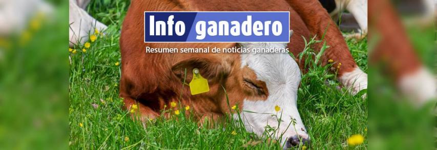 (Español) El tratamiento de lactancia como alternativa de mejora reproductiva de la vaca de cría