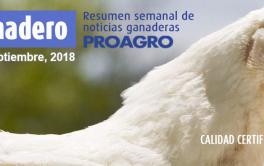 (Español) El stock de ganado bovino creció 2,7% y es el máximo en una década