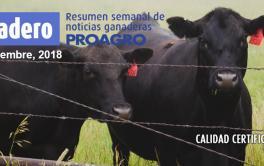 Argentina será el sexto exportador mundial de carne vacuna