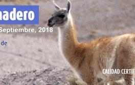 Por primera vez, Argentina exporta carne de guanaco a Bélgica
